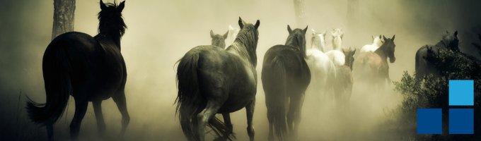 seguro caballos pamplona