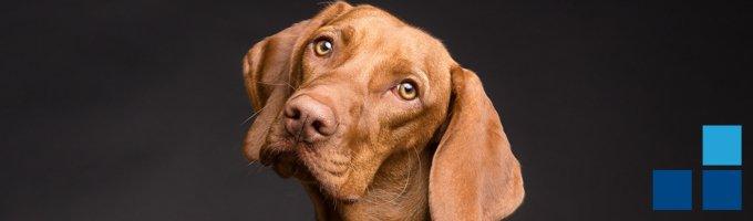 seguro perros pamplona