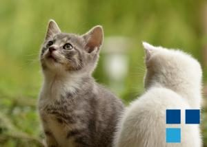 seguro para gatos